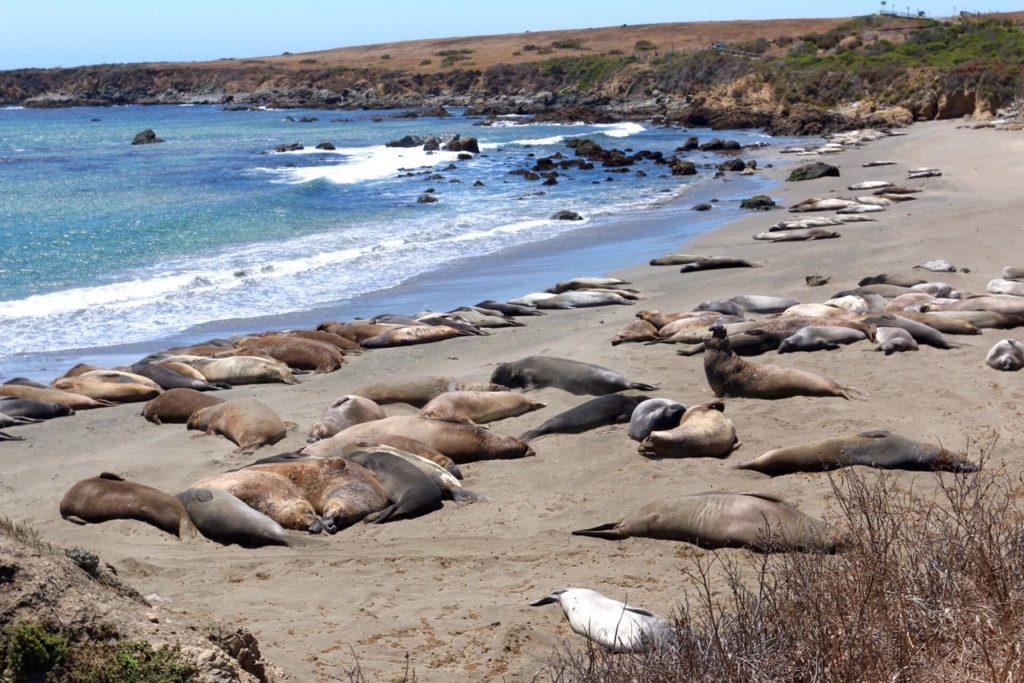 Elephant Seal Beach