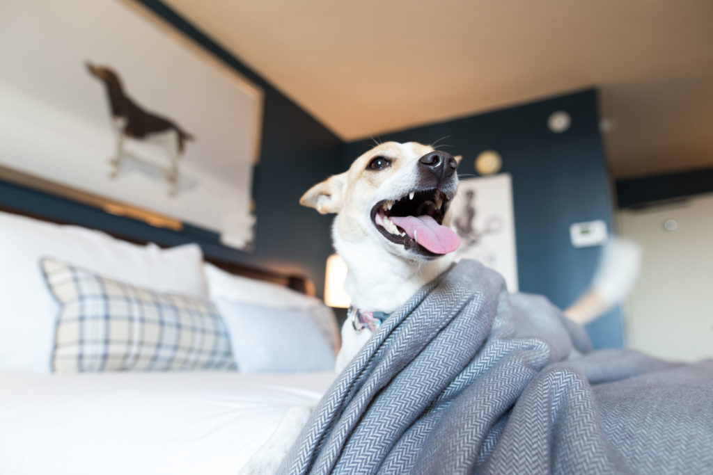 Pet friendly hotels in Richmond